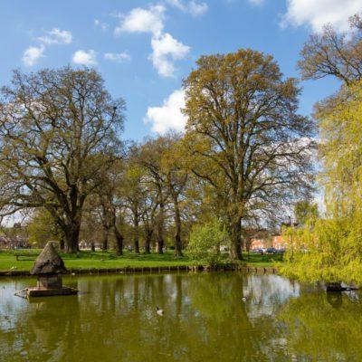 Oak Common 9